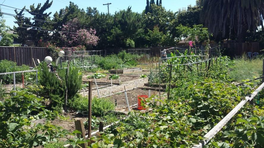 Existing Neighborhood Garden